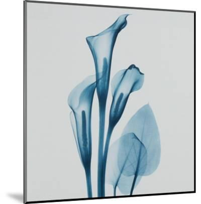 Calla Lilly Blue-Albert Koetsier-Mounted Art Print