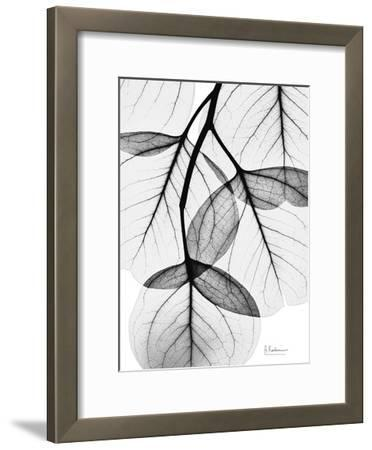 Flowing Eucalyptus in Black and White-Albert Koetsier-Framed Art Print
