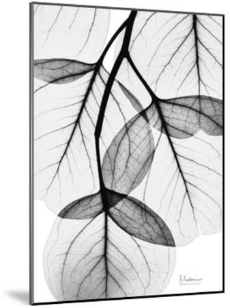 Flowing Eucalyptus in Black and White-Albert Koetsier-Mounted Art Print