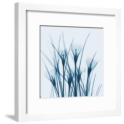 Crocus Blue-Albert Koetsier-Framed Art Print