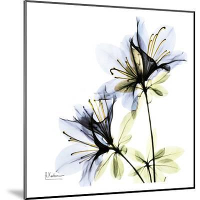 Blue Twin Azalea in Bloom-Albert Koetsier-Mounted Art Print