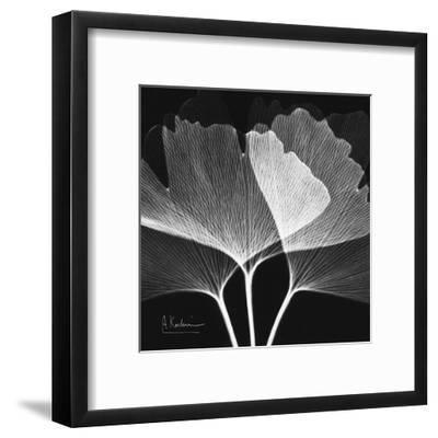 Ginkgo Close Up Black and White-Albert Koetsier-Framed Art Print