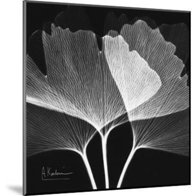Ginkgo Close Up Black and White-Albert Koetsier-Mounted Art Print
