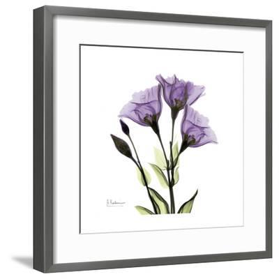 Gentian in Purple-Albert Koetsier-Framed Art Print