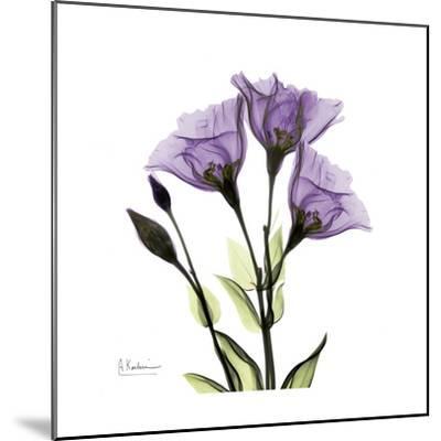 Gentian in Purple-Albert Koetsier-Mounted Art Print
