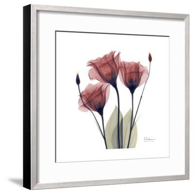 Gentian Trio in Red-Albert Koetsier-Framed Art Print