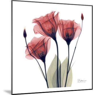 Gentian Trio in Red-Albert Koetsier-Mounted Art Print