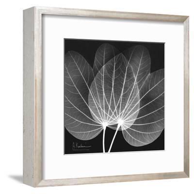 Orchid Tree Black and White-Albert Koetsier-Framed Art Print