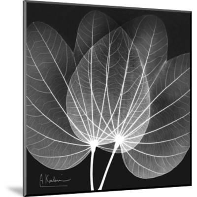 Orchid Tree Black and White-Albert Koetsier-Mounted Art Print