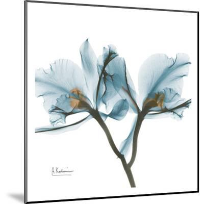 Orchids in Blue-Albert Koetsier-Mounted Art Print