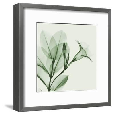 Madelia in Green-Albert Koetsier-Framed Art Print