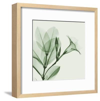 Madelia in Green-Albert Koetsier-Framed Art Print