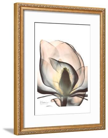 Magnolia Close Up-Albert Koetsier-Framed Art Print