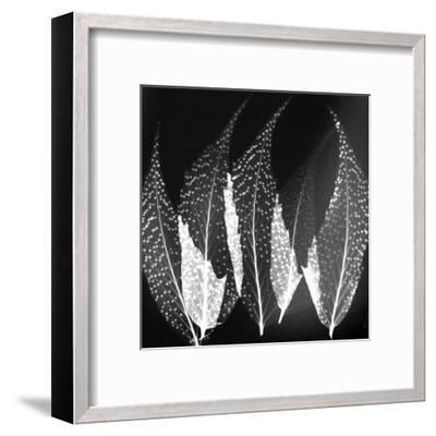 Japanese Fern Black and White-Albert Koetsier-Framed Art Print