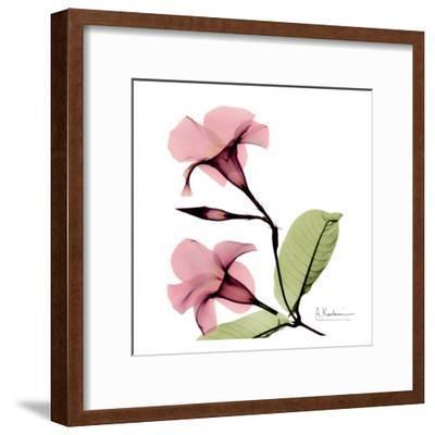 Mandelilla-Albert Koetsier-Framed Art Print