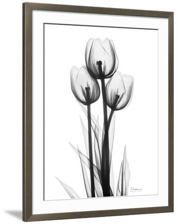 Sweet Tulips in Black and White-Albert Koetsier-Framed Art Print