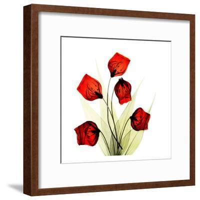 Sandersonia Bunch in Red-Albert Koetsier-Framed Art Print