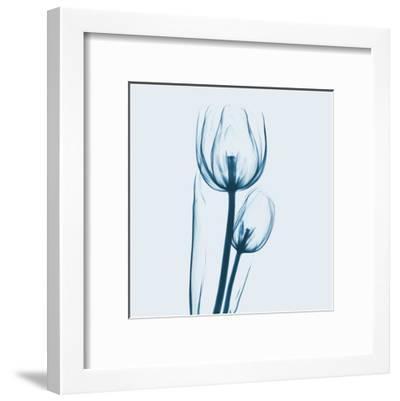 Tulip in Blue-Albert Koetsier-Framed Art Print
