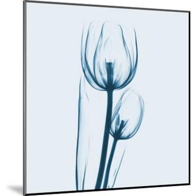 Tulip in Blue-Albert Koetsier-Mounted Art Print