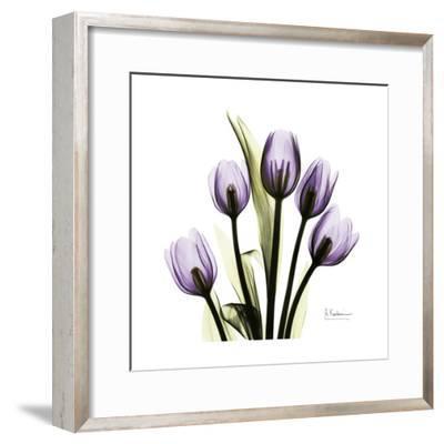 Tulip in Purple-Albert Koetsier-Framed Art Print
