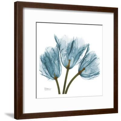 Tulips in Blue-Albert Koetsier-Framed Art Print