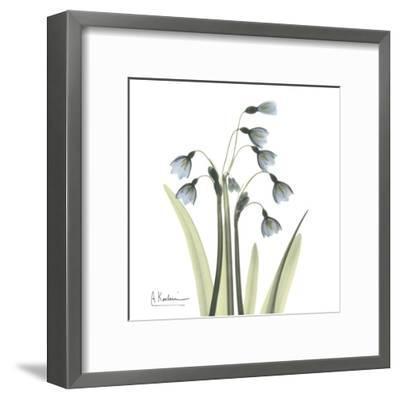 Snowdrop-Albert Koetsier-Framed Art Print