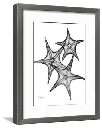 Star Fish Burst Triple-Albert Koetsier-Framed Art Print