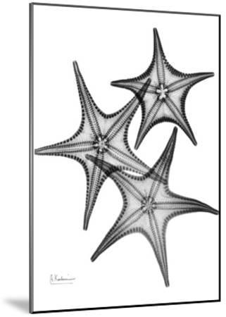 Star Fish Burst Triple-Albert Koetsier-Mounted Art Print