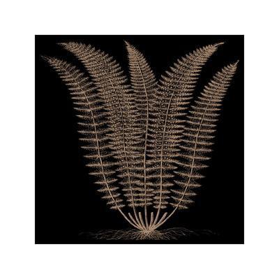Fern (on black)-Botanical Series-Framed Giclee Print