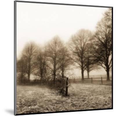 Fence Row and Trees-Harold Silverman-Mounted Art Print