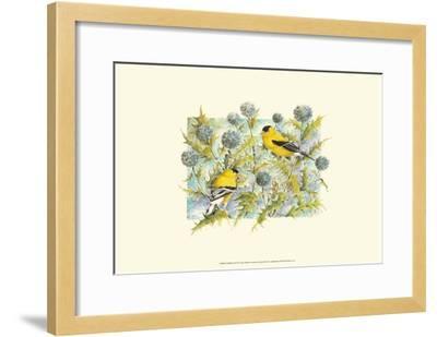 Goldfinches-Janet Mandel-Framed Art Print