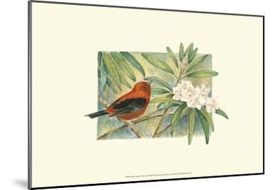 Scarlet Tanager-Janet Mandel-Mounted Art Print