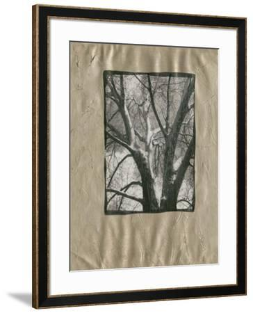 Silver Plate Birch II-Ethan Harper-Framed Art Print