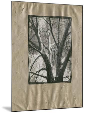 Silver Plate Birch II-Ethan Harper-Mounted Art Print