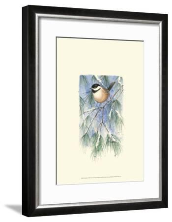Chickadee in White Pine-Janet Mandel-Framed Art Print