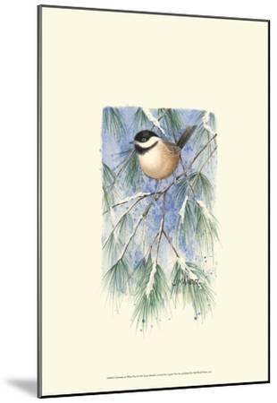 Chickadee in White Pine-Janet Mandel-Mounted Art Print