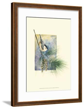 Nuthatch and Pine-Janet Mandel-Framed Art Print
