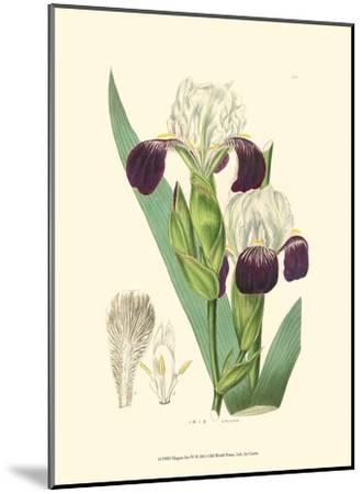 Elegant Iris IV-Samuel Curtis-Mounted Art Print