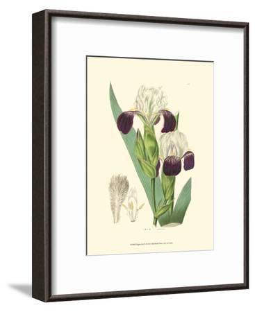 Elegant Iris IV-Samuel Curtis-Framed Art Print