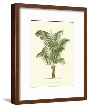 Coastal Palm II--Framed Art Print