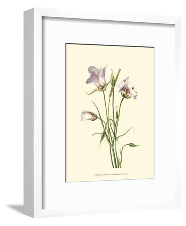 Delicate Wildflowers IV--Framed Art Print