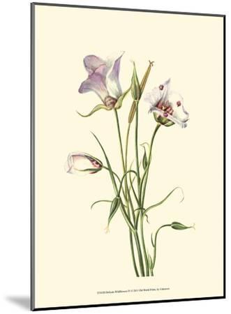 Delicate Wildflowers IV--Mounted Art Print