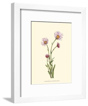 Delicate Wildflowers V--Framed Art Print