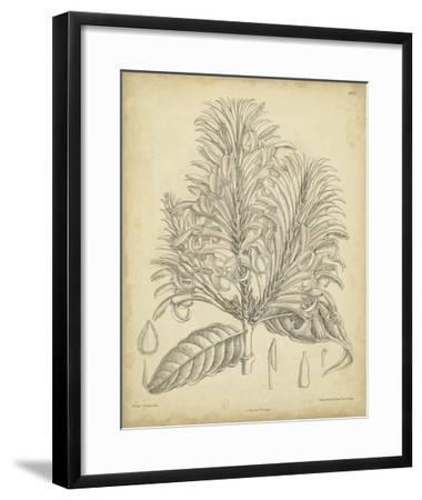 Vintage Curtis Botanical V-Samuel Curtis-Framed Giclee Print