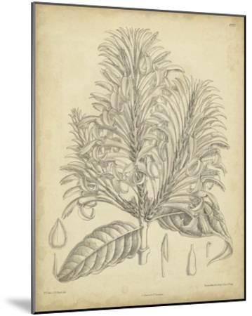 Vintage Curtis Botanical V-Samuel Curtis-Mounted Giclee Print