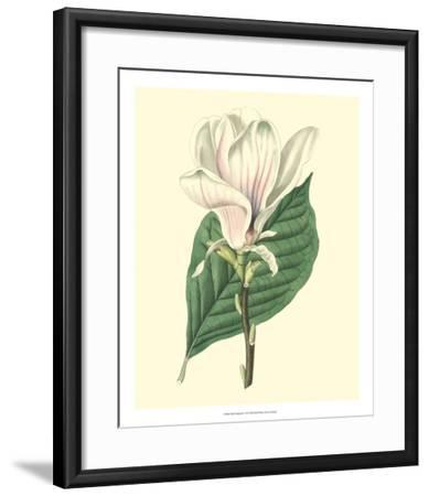 Yulan Magnolia--Framed Giclee Print