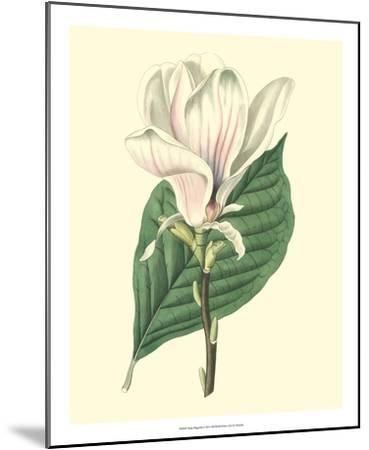 Yulan Magnolia--Mounted Giclee Print