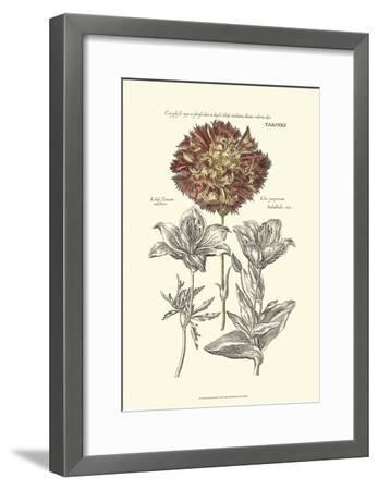 Tinted Floral IV-Besler Basilius-Framed Art Print