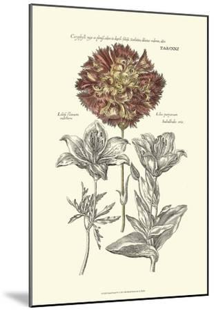 Tinted Floral IV-Besler Basilius-Mounted Art Print