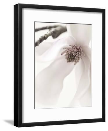 Magnolia Blush I-Christine Zalewski-Framed Art Print